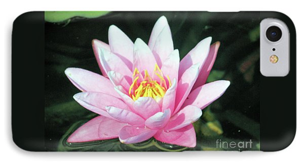 Frail Beauty - A Water Lily IPhone Case by J Jaiam
