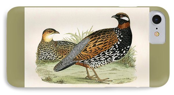 Francolin IPhone Case by English School