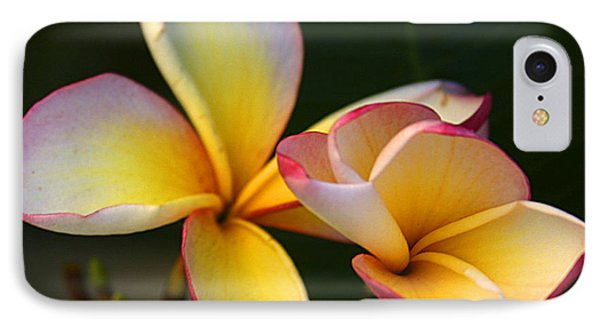 Frangipani Flowers IPhone Case by Ralph A  Ledergerber-Photography