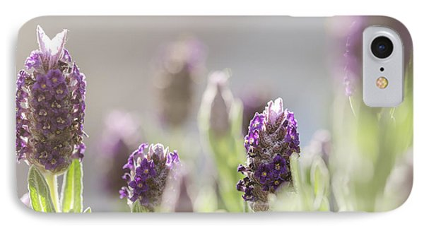 French Lavendar Buds IPhone Case