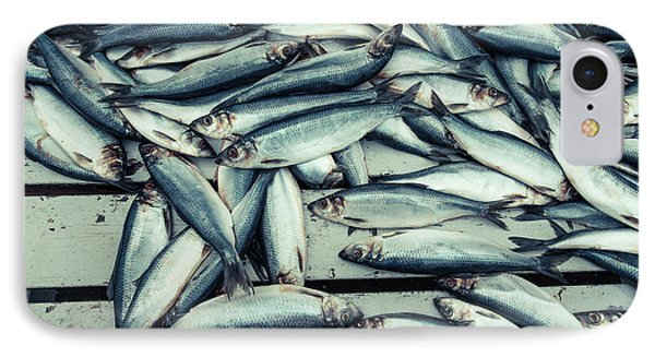IPhone Case featuring the photograph Fresh Caught Herring Fish by Edward Fielding