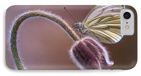 Fresh Pasque Flower And White Butterfly IPhone Case by Jaroslaw Blaminsky