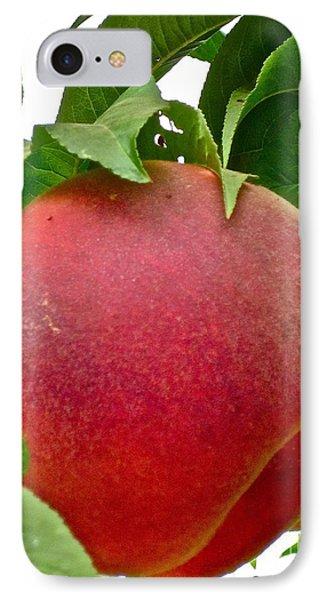 Fresh Peach Phone Case by Gwyn Newcombe