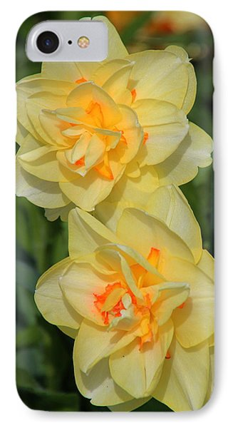 Friendship Daffodils Phone Case by Rosanne Jordan