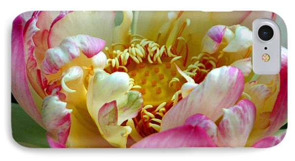 Frilly Lotus IPhone Case by Annie Johnson