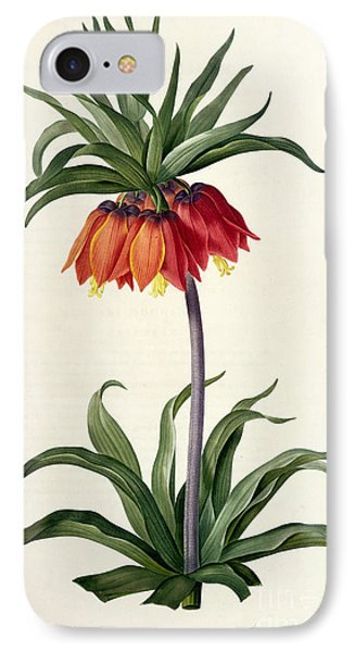 Fritillaria Imperialis IPhone Case by Pierre Joseph Redoute
