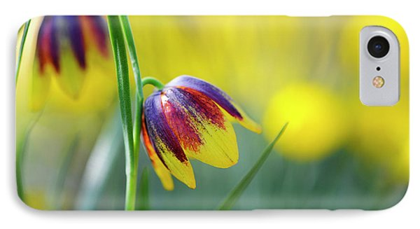 Fritillaria Reuteri IPhone Case by Tim Gainey