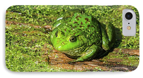 Frog And Duck Weed IPhone Case