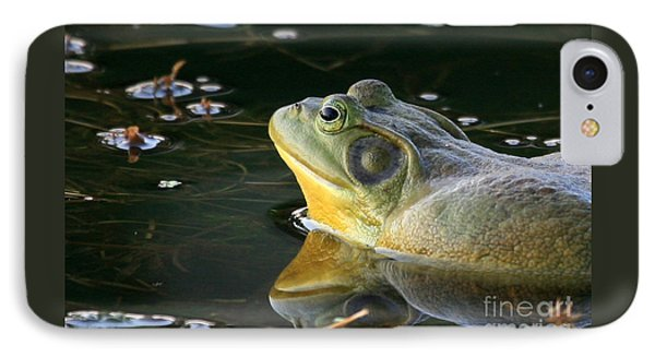 Frog At Sunset IPhone Case by Paula Guttilla