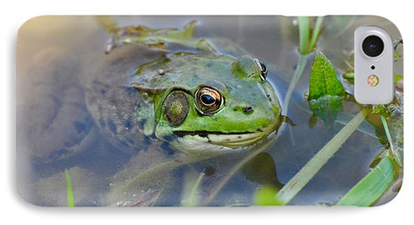 Frog Hiding In The Pond IPhone Case by Lisa DiFruscio