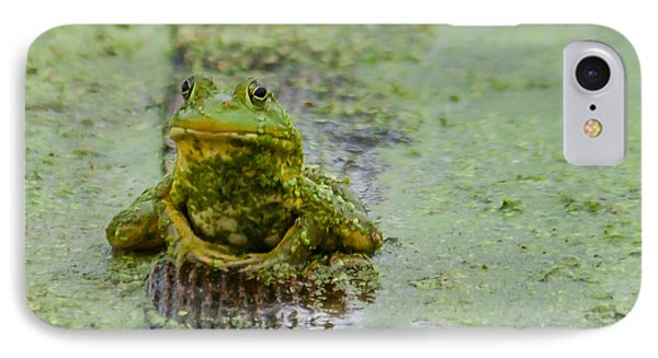 Frog On A Plank IPhone Case by Edward Peterson