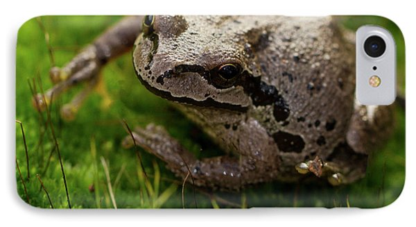 Frog On The Grass IPhone Case by Jean Noren