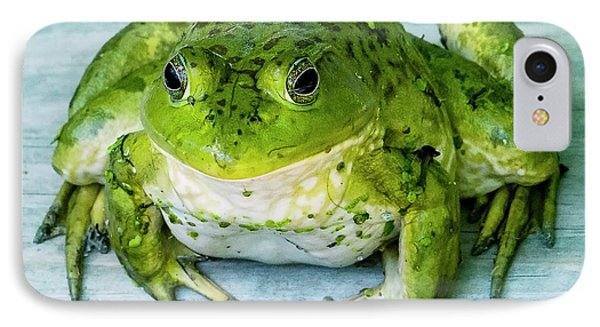 Frog Portrait IPhone Case by Edward Peterson