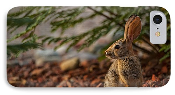 IPhone Case featuring the photograph Frontyard Bunny by Dan McManus