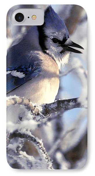 Frosty Morning Blue Jay IPhone Case