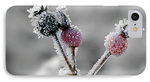 Frozen Buds IPhone Case by Inge Riis McDonald