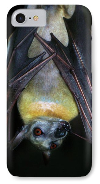 IPhone Case featuring the photograph Fruit Bat by Anthony Jones