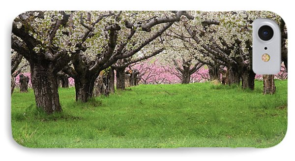 Fruit Orchard IPhone Case by Utah Images