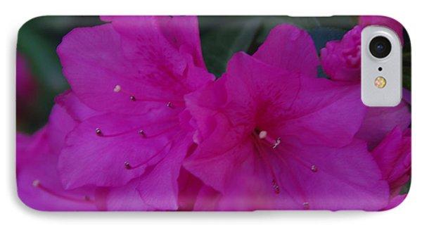 Fuchsia Azaleas IPhone Case by Robyn Stacey