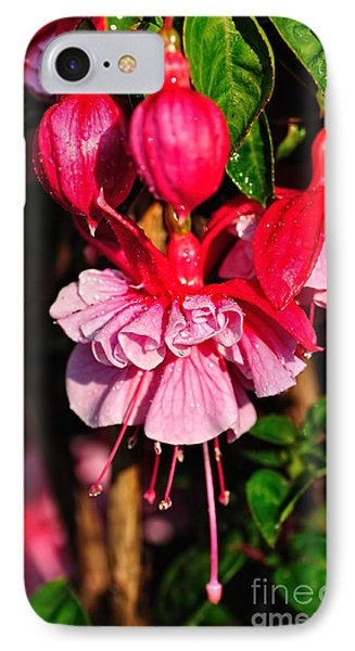 Fuchsias With Droplets IPhone Case by Kaye Menner