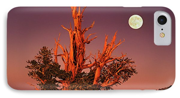 Full Moon Behind Ancient Bristlecone Pine White Mountains California IPhone Case by Dave Welling