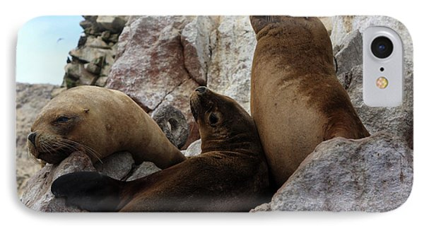 IPhone Case featuring the photograph Fur Seals On The Ballestas Islands, Peru by Aidan Moran