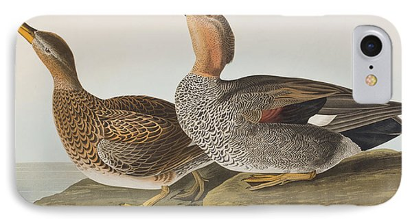 Gadwall Duck IPhone Case by John James Audubon