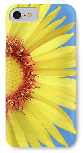 Gaillardia Aristata   Blanketflower IPhone Case by Jim Hughes
