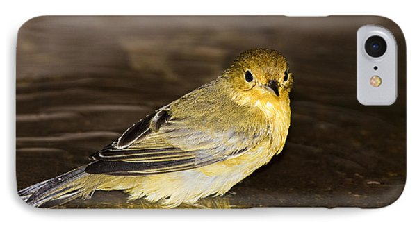 Galapagos Mangrove Warbler Phone Case by Dave Fleetham - Printscapes