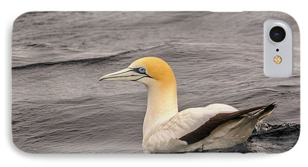 Gannet 5 IPhone Case