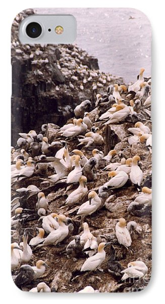 Gannet Cliffs IPhone Case by Mary Mikawoz