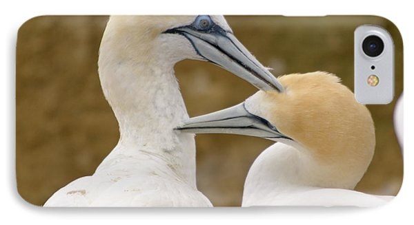 IPhone 7 Case featuring the photograph Gannet Pair 1 by Werner Padarin