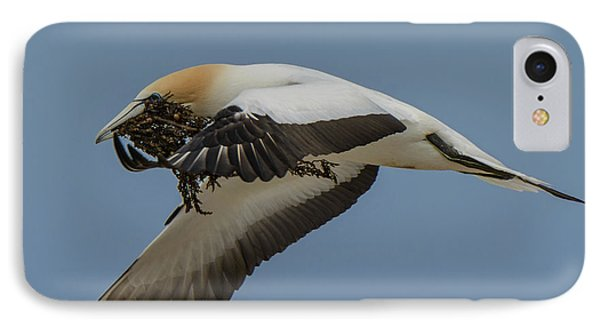 IPhone Case featuring the photograph Gannets 1 by Werner Padarin