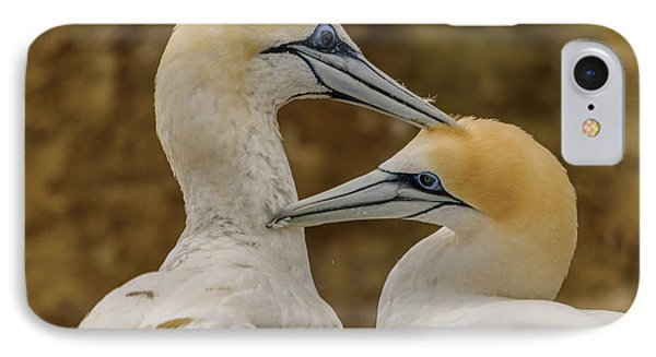 Gannets 4 IPhone Case by Werner Padarin