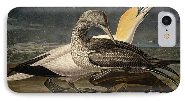 Gannets IPhone Case by John James Audubon