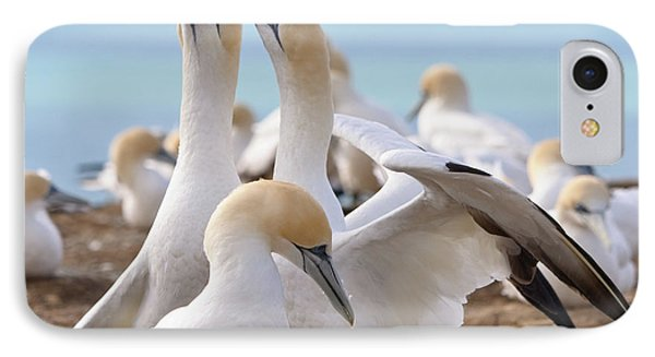 IPhone 7 Case featuring the photograph Gannets by Werner Padarin