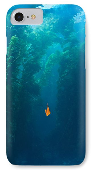 Garibaldi Fish In Giant Kelp Underwater Phone Case by James Forte