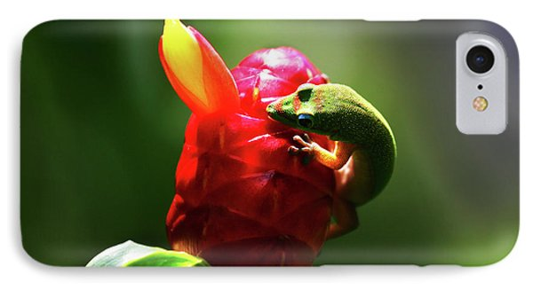 IPhone Case featuring the photograph Gecko #1 by Anthony Jones