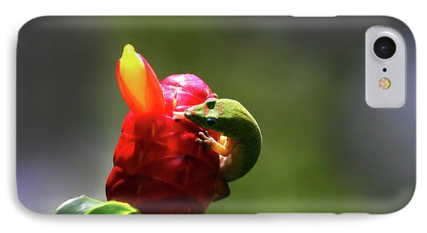 IPhone Case featuring the photograph Gecko #2 by Anthony Jones
