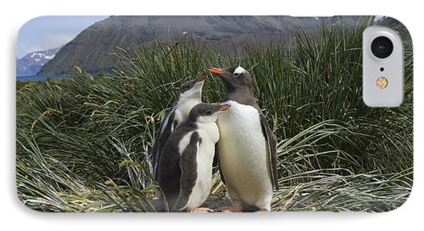 Gentoo Penguin And Young Chicks IPhone Case by Suzi Eszterhas