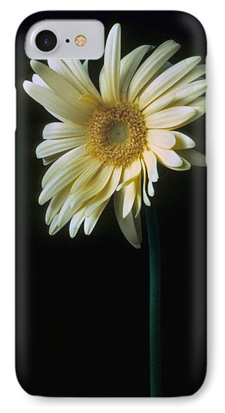 Gerber Daisy IPhone Case by Laurie Paci