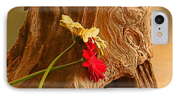Gerber Daisy On Driftwod IPhone Case