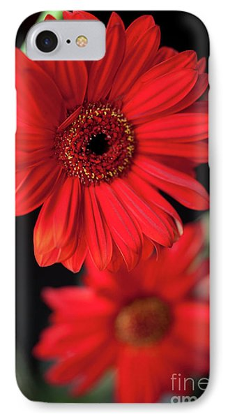 Gerbera Phone Case by Amanda Barcon