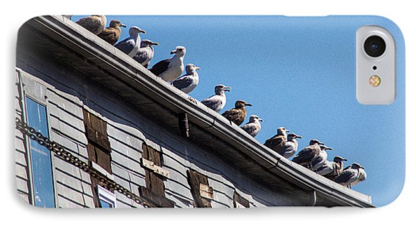 Get Your Gulls In A Row IPhone Case
