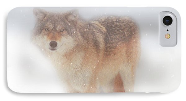 Ghost Wolf IPhone Case by Greg Slocum