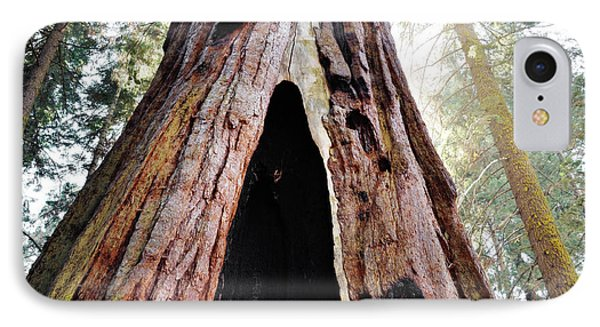 Giant Forest Giant Sequoia IPhone Case