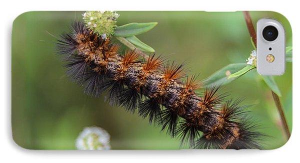 Giant Leopard Moth Caterpillar IPhone Case