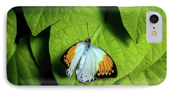 IPhone Case featuring the photograph Giant Orange Tip Butterfly by Tom Mc Nemar
