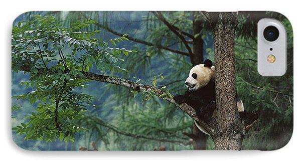 Giant Panda Ailuropoda Melanoleuca Phone Case by Cyril Ruoso