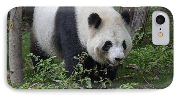 Giant Panda IPhone Case by Wade Aiken